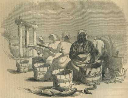 """Heading Herring"" from the story on North Carolina Fisheries"
